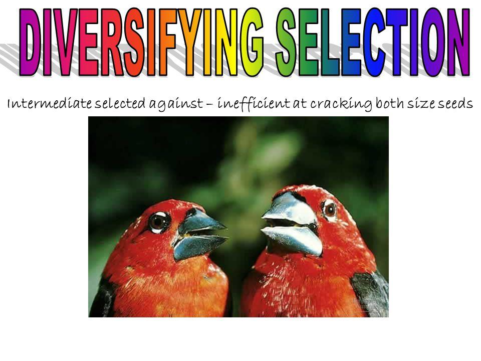 DIVERSIFYING SELECTION