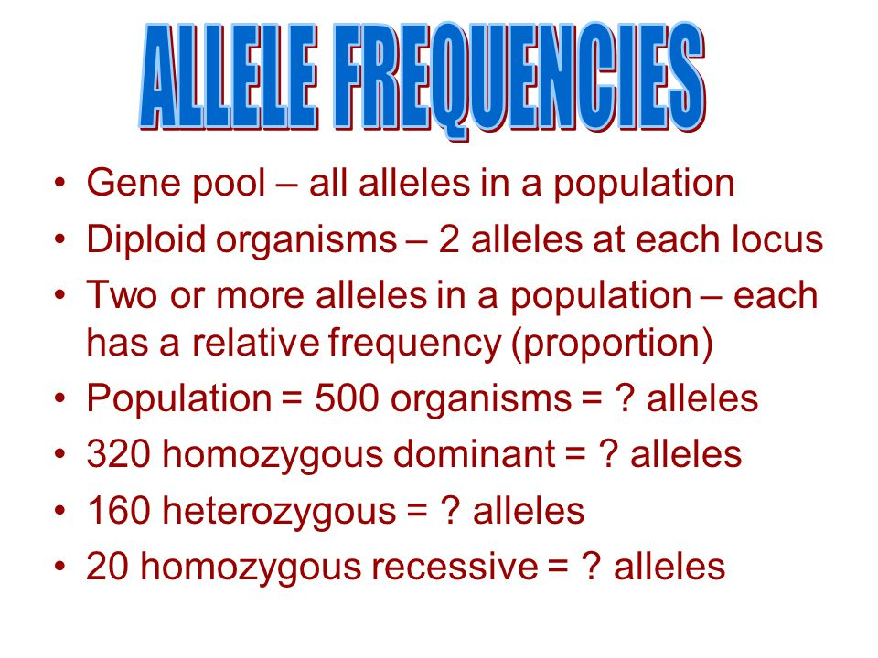ALLELE FREQUENCIES Gene pool – all alleles in a population