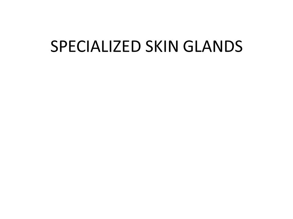 SPECIALIZED SKIN GLANDS