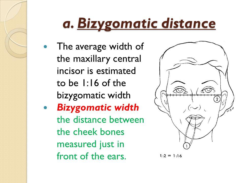 a. Bizygomatic distance