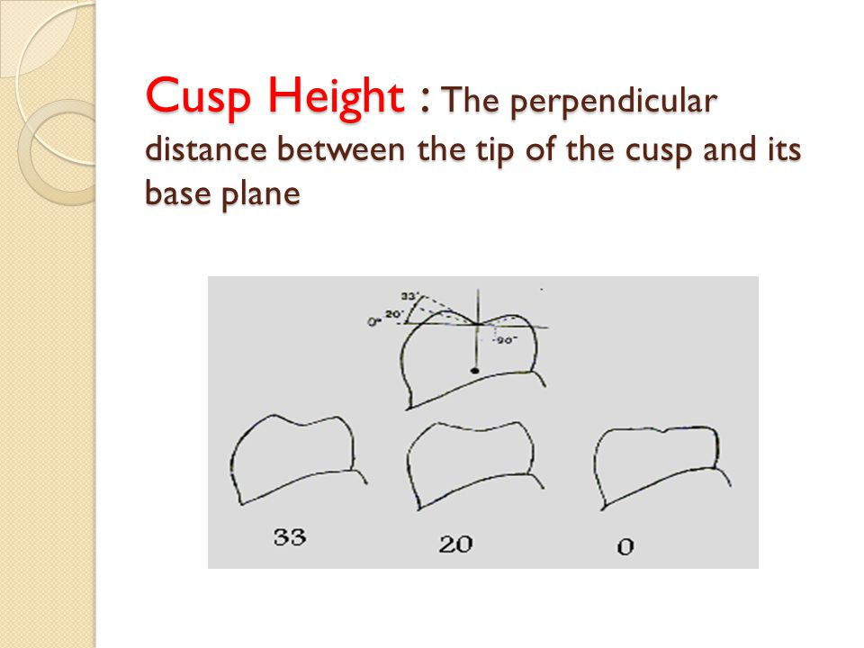 Cusp Height : The perpendicular distance between the tip of the cusp and its base plane