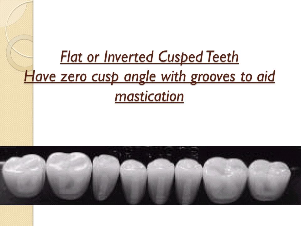 Flat or Inverted Cusped Teeth Have zero cusp angle with grooves to aid mastication