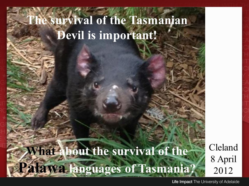 The survival of the Tasmanian Devil is important!