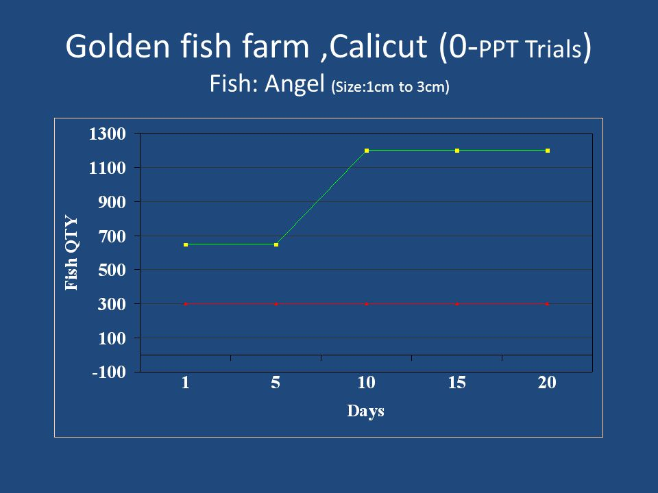 Golden fish farm ,Calicut (0-PPT Trials) Fish: Angel (Size:1cm to 3cm)