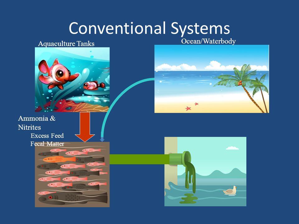 Conventional Systems Ocean/Waterbody Aquaculture Tanks