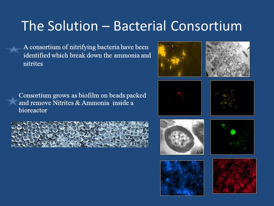 The Solution – Bacterial Consortium