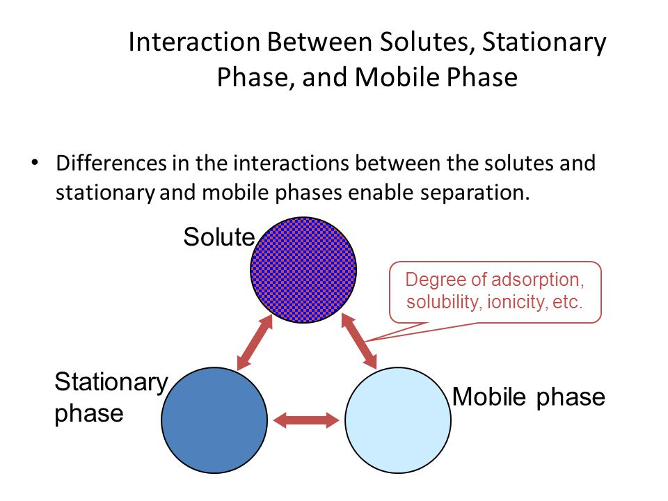 Interaction Between Solutes, Stationary Phase, and Mobile Phase