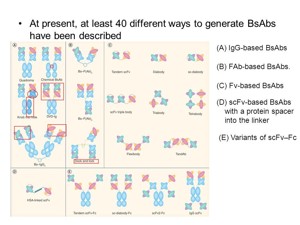 At present, at least 40 different ways to generate BsAbs have been described