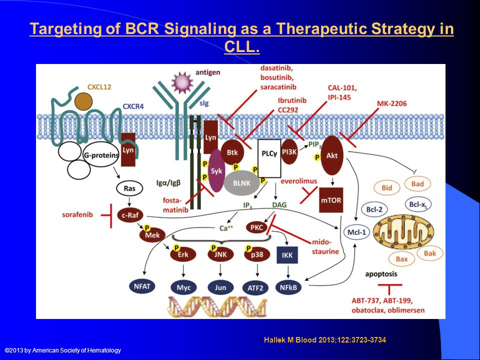 Targeting of BCR Signaling as a Therapeutic Strategy in CLL.