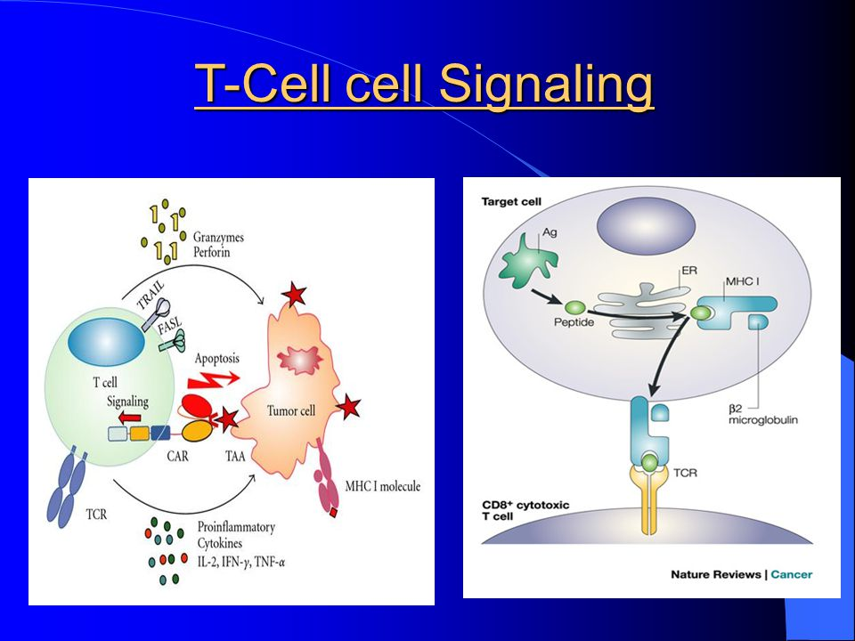 T-Cell cell Signaling