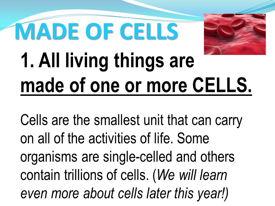 MADE OF CELLS 1. All living things are made of one or more CELLS.