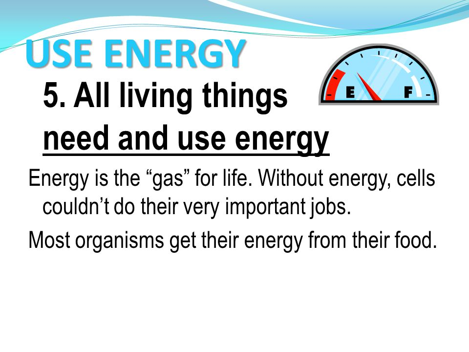 USE ENERGY 5. All living things need and use energy