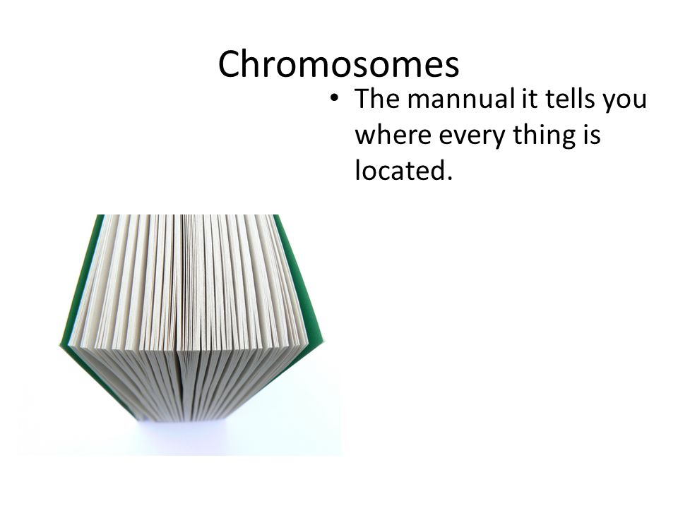 Chromosomes The mannual it tells you where every thing is located.