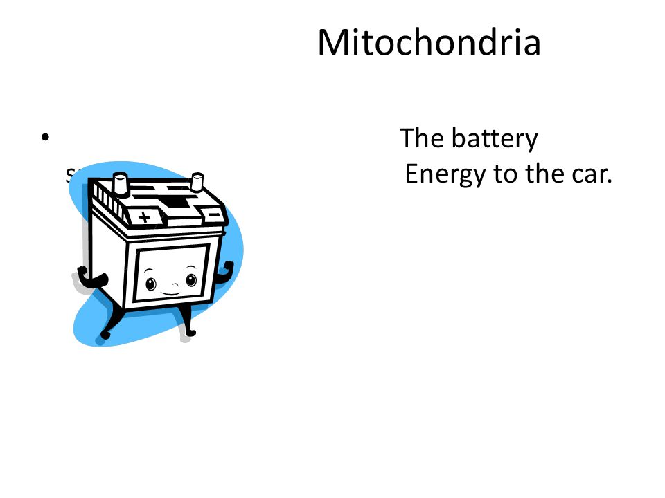 Mitochondria The battery supplies Energy to the car.