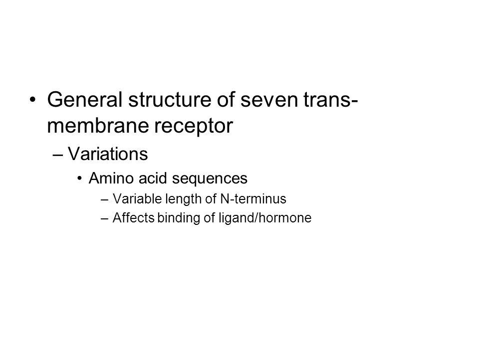 General structure of seven trans-membrane receptor