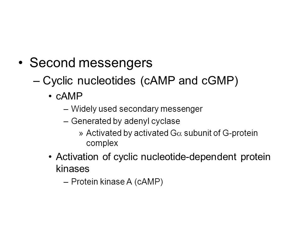 Second messengers Cyclic nucleotides (cAMP and cGMP) cAMP