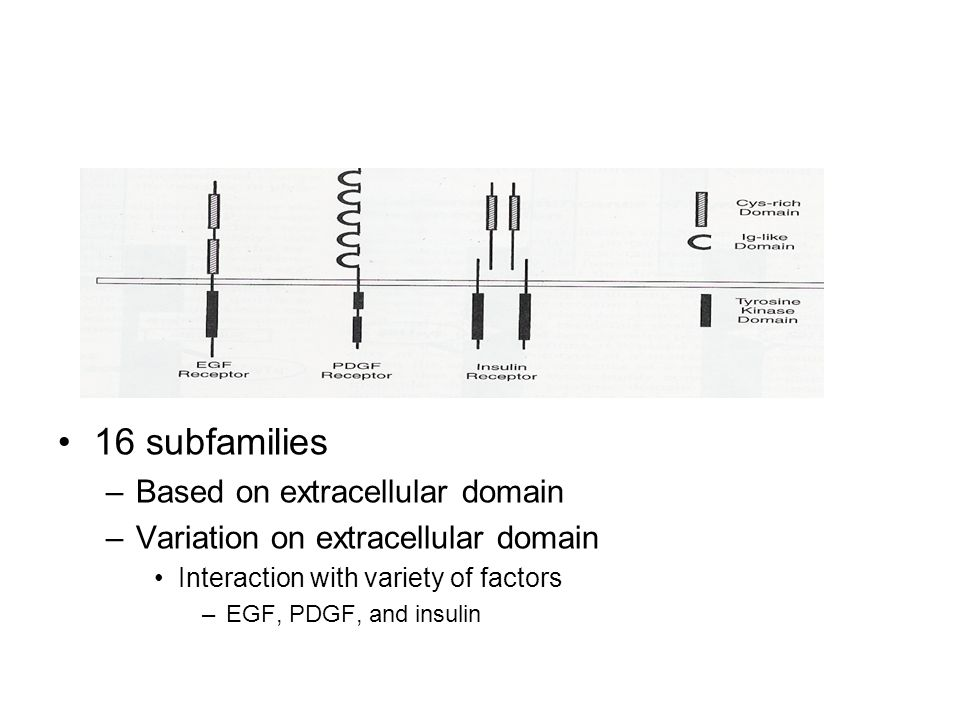 16 subfamilies Based on extracellular domain