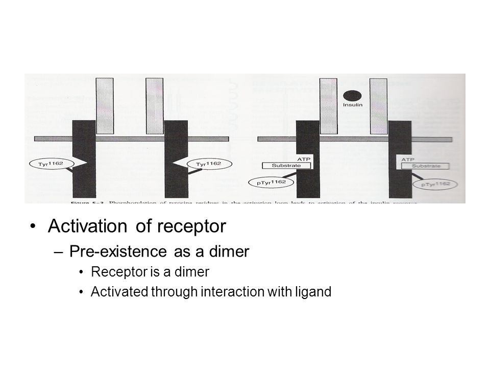 Activation of receptor