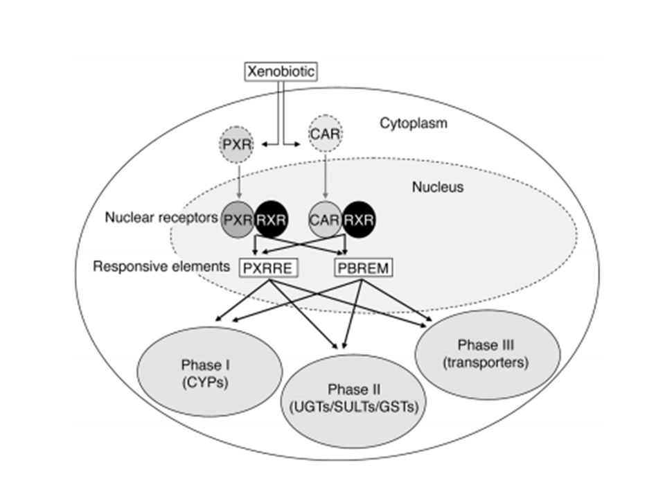 Between PXR and CAR Xenobiotics interactions.