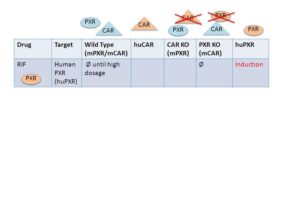 PXR CAR. PXR. CAR. CAR. PXR. CAR. PXR. Drug. Target. Wild Type (mPXR/mCAR) huCAR. CAR KO (mPXR)
