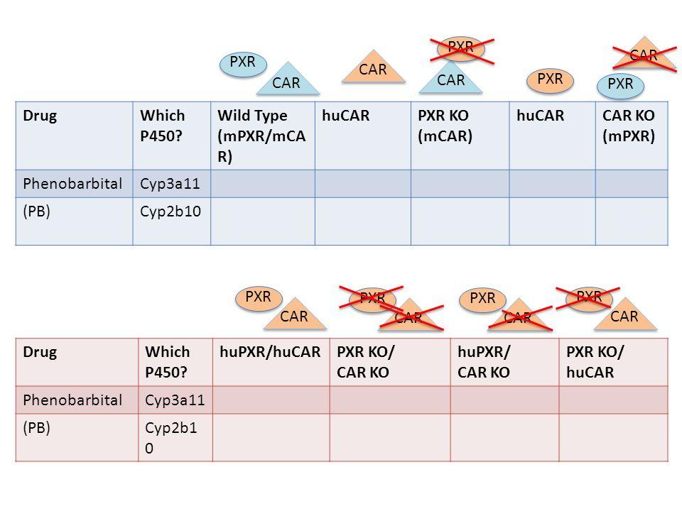 PXR CAR. PXR. CAR. CAR. CAR. PXR. PXR. Drug. Which P450 Wild Type (mPXR/mCAR) huCAR. PXR KO (mCAR)