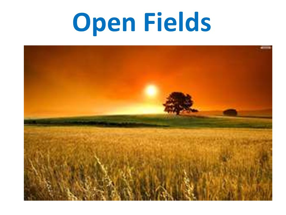 Open Fields