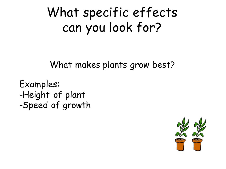 What makes plants grow best