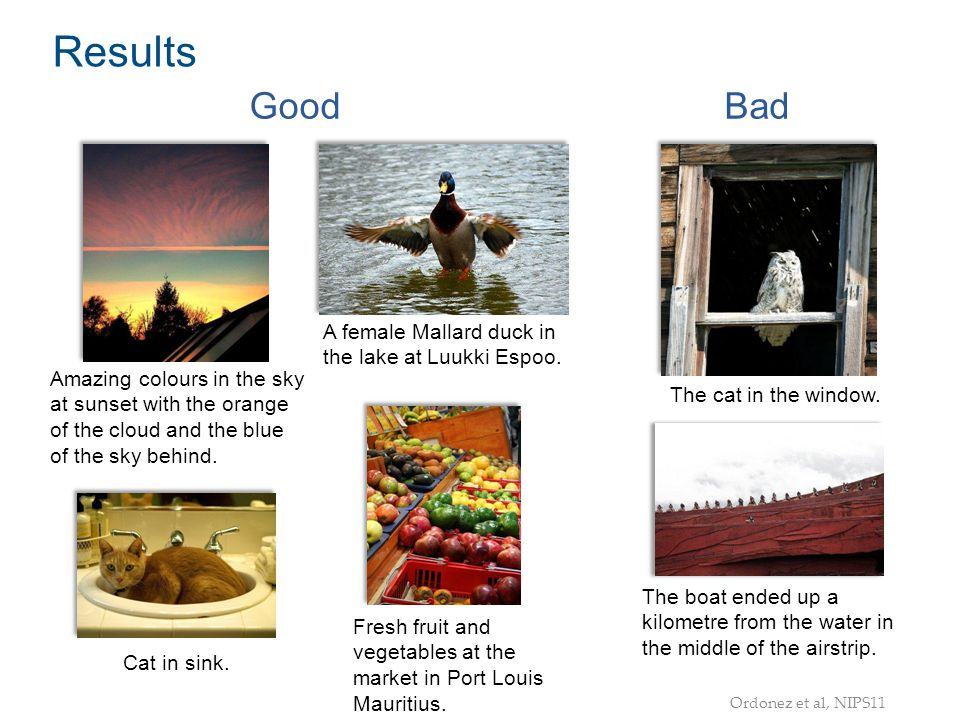 Results Good Bad A female Mallard duck in the lake at Luukki Espoo.