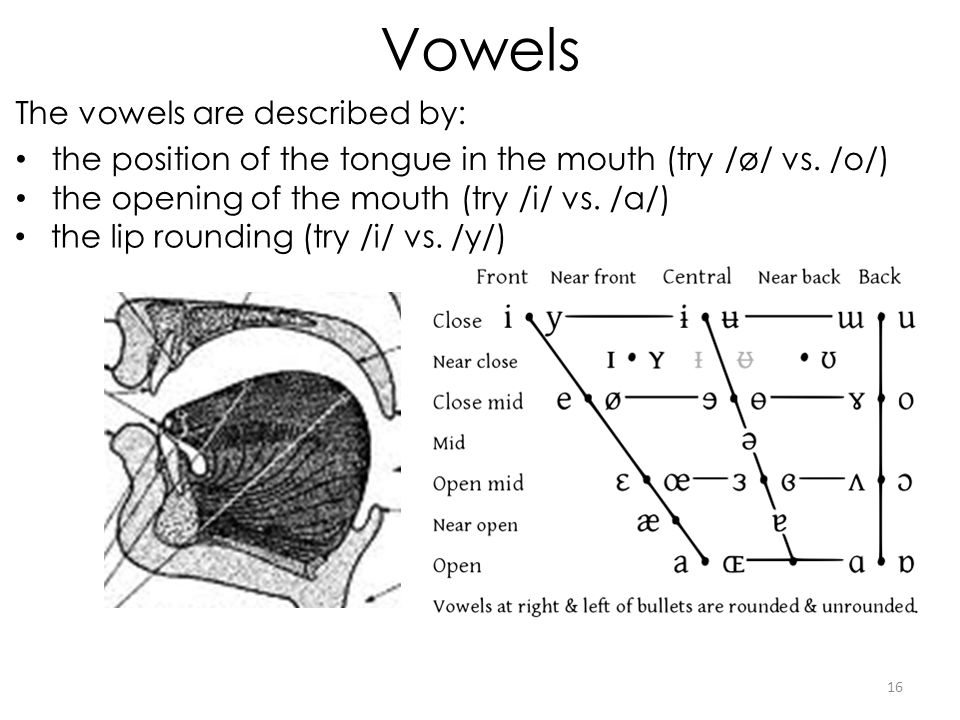 Vowels The vowels are described by: