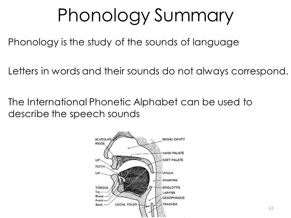 Phonology Summary Phonology is the study of the sounds of language