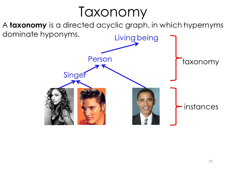 Taxonomy A taxonomy is a directed acyclic graph, in which hypernyms
