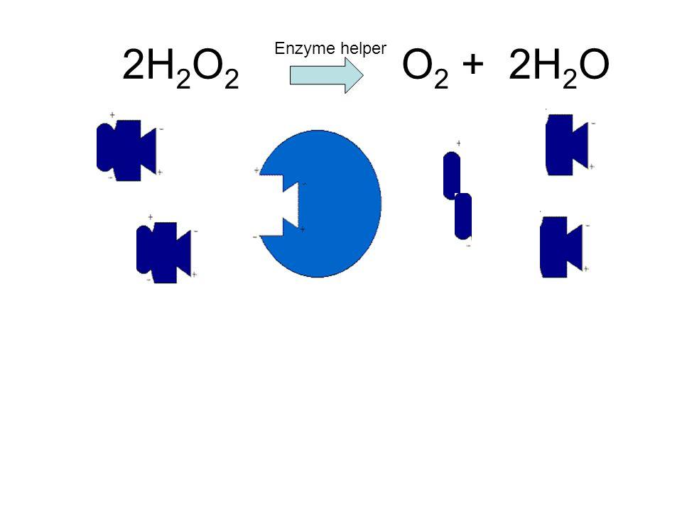 2H2O2 O2 + 2H2O Enzyme helper