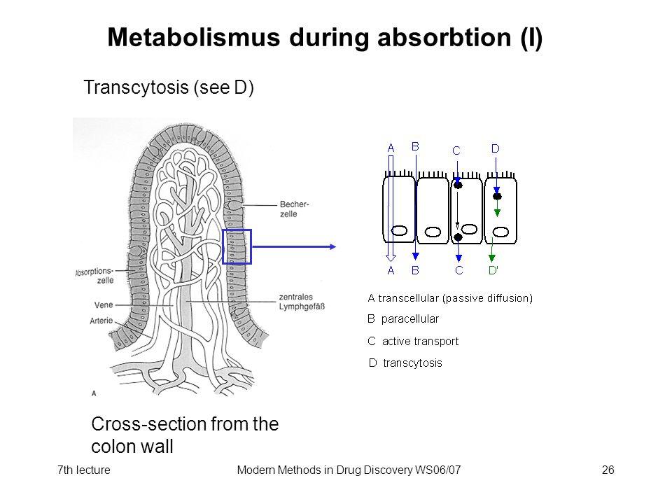 Metabolismus during absorbtion (I)