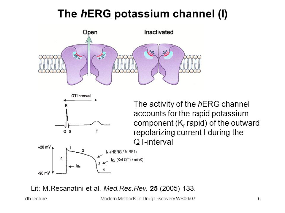 The hERG potassium channel (I)