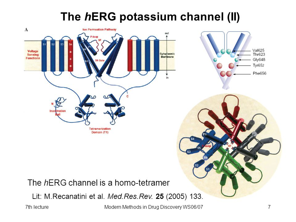 The hERG potassium channel (II)