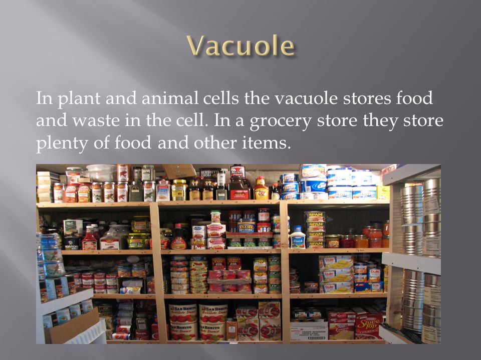 Vacuole In plant and animal cells the vacuole stores food and waste in the cell.
