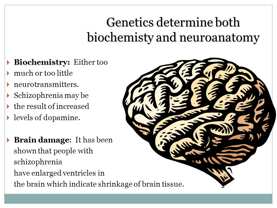 Genetics determine both biochemisty and neuroanatomy