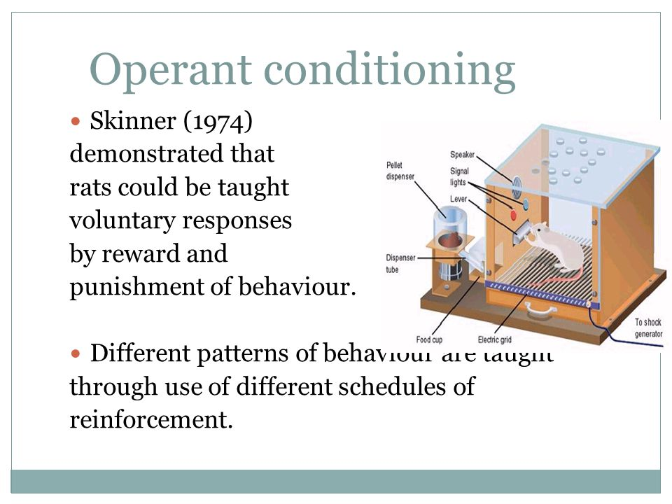 Operant conditioning Skinner (1974) demonstrated that