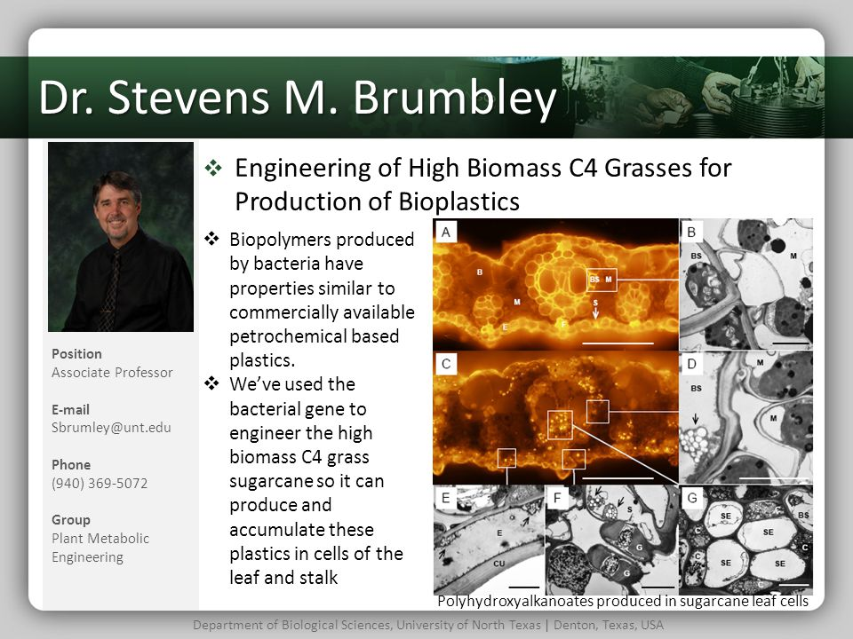 Dr. Stevens M. Brumbley Engineering of High Biomass C4 Grasses for Production of Bioplastics.