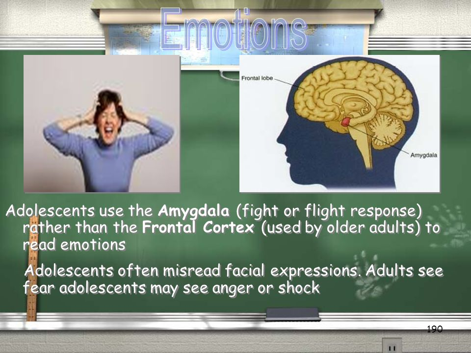 Emotions Adolescents use the Amygdala (fight or flight response) rather than the Frontal Cortex (used by older adults) to read emotions.