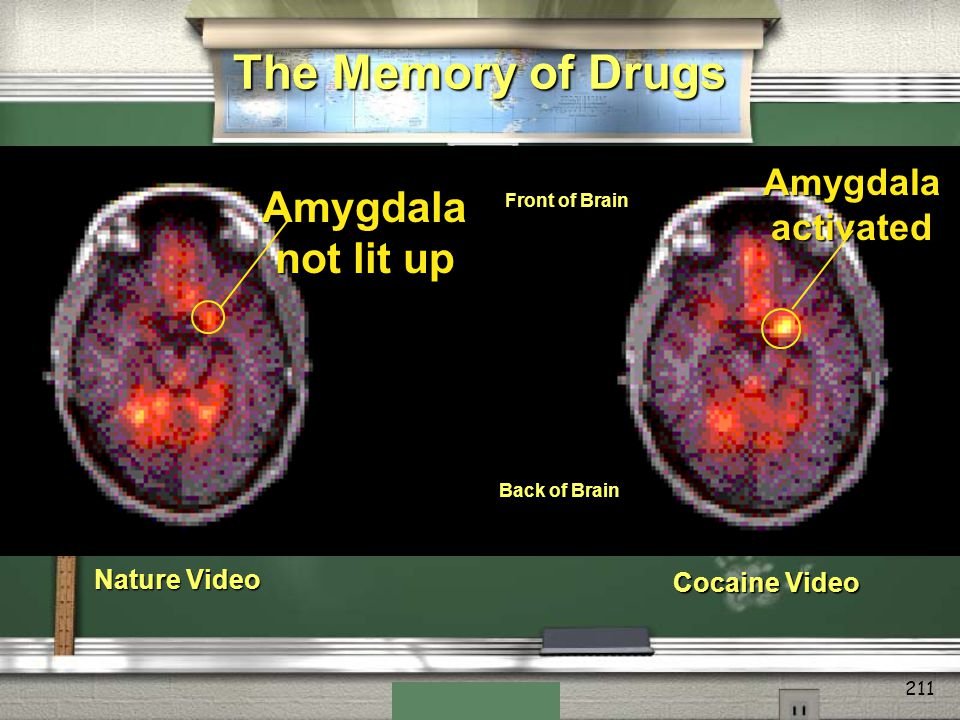 The Memory of Drugs Amygdala not lit up Amygdala activated
