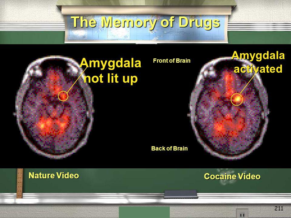 The Memory of Drugs Amygdala not lit up Amygdala activated