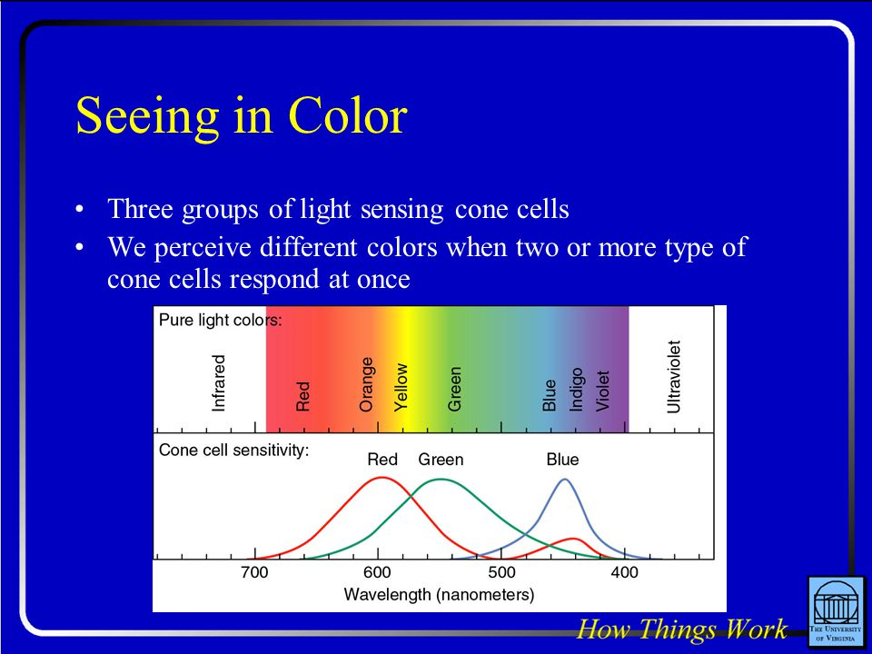 Seeing in Color Three groups of light sensing cone cells