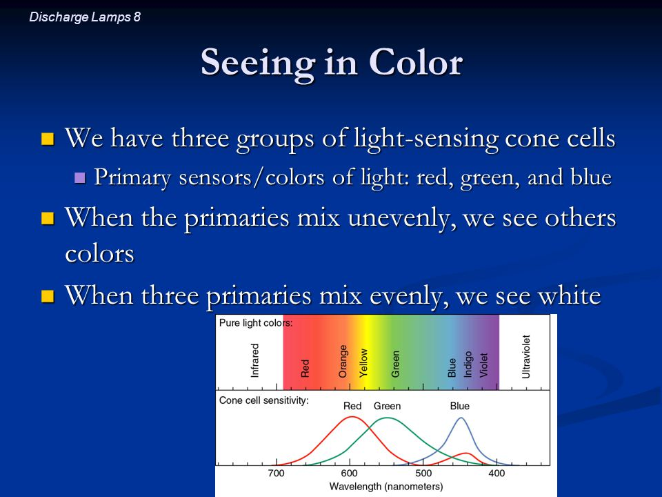 Seeing in Color We have three groups of light-sensing cone cells