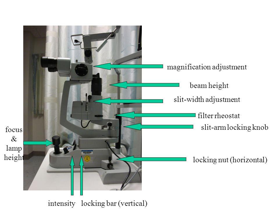 magnification adjustment