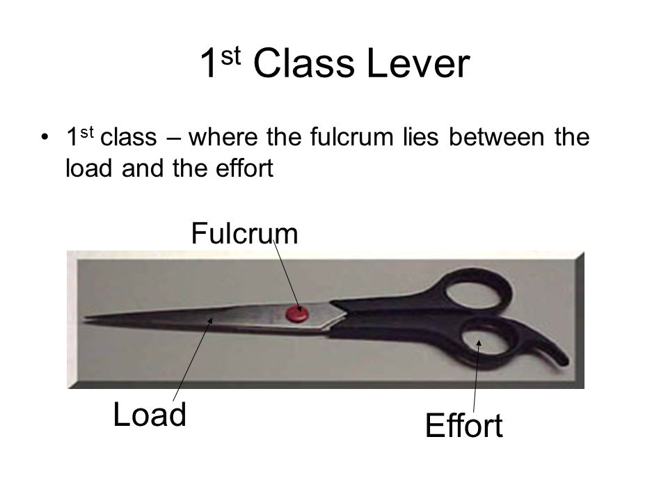 1st Class Lever Load Effort Fulcrum