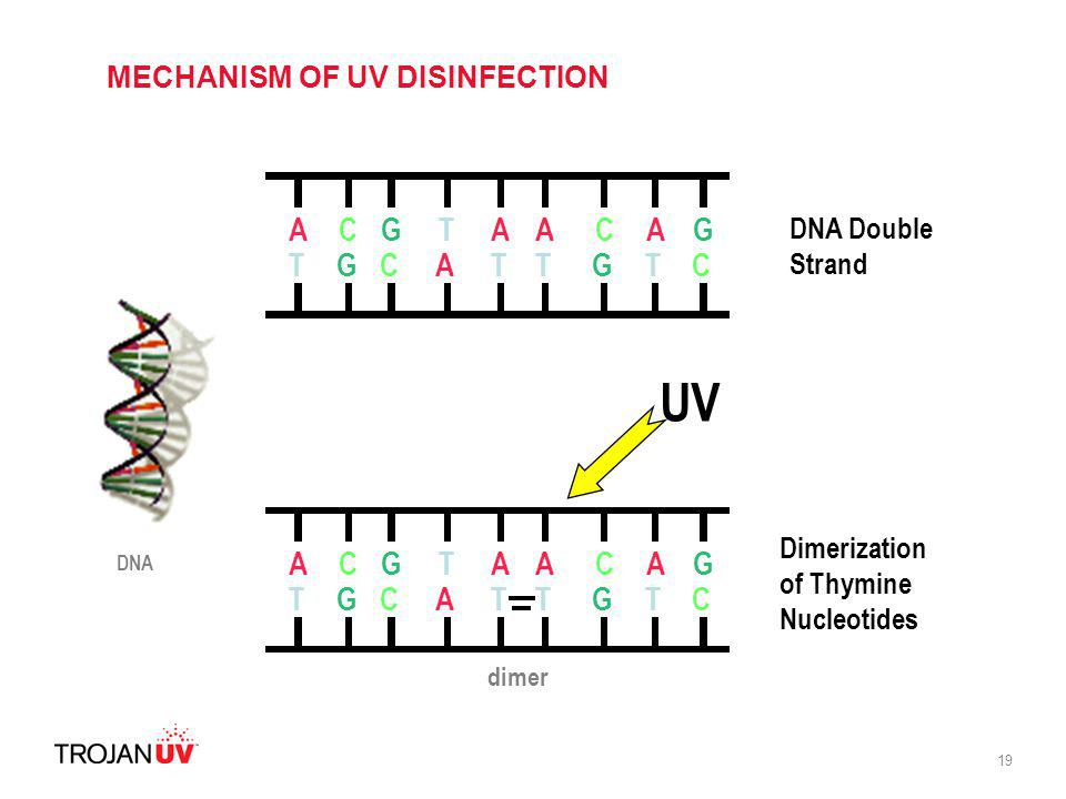 MECHANISM OF UV DISINFECTION