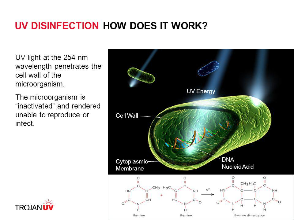 UV DISINFECTION HOW DOES IT WORK