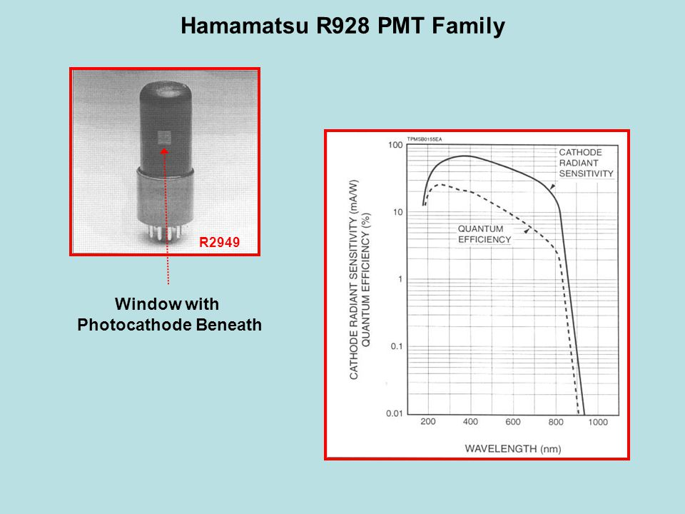Hamamatsu R928 PMT Family R2949 Window with Photocathode Beneath