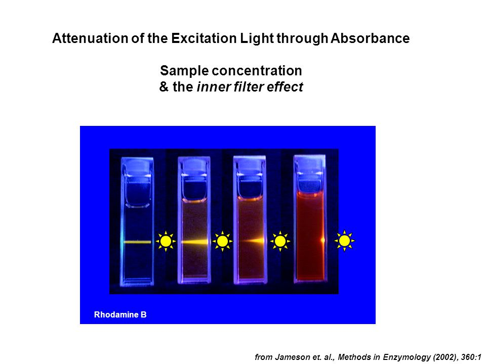 Attenuation of the Excitation Light through Absorbance